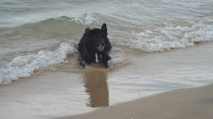 """At the beach.  """"Come on, throw me a stick."""""""