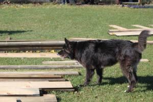 Sydney overseeing lumber